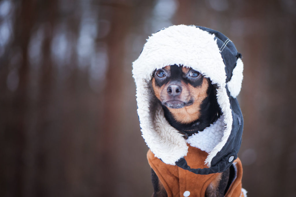 a dog wearing a hooded winter coat