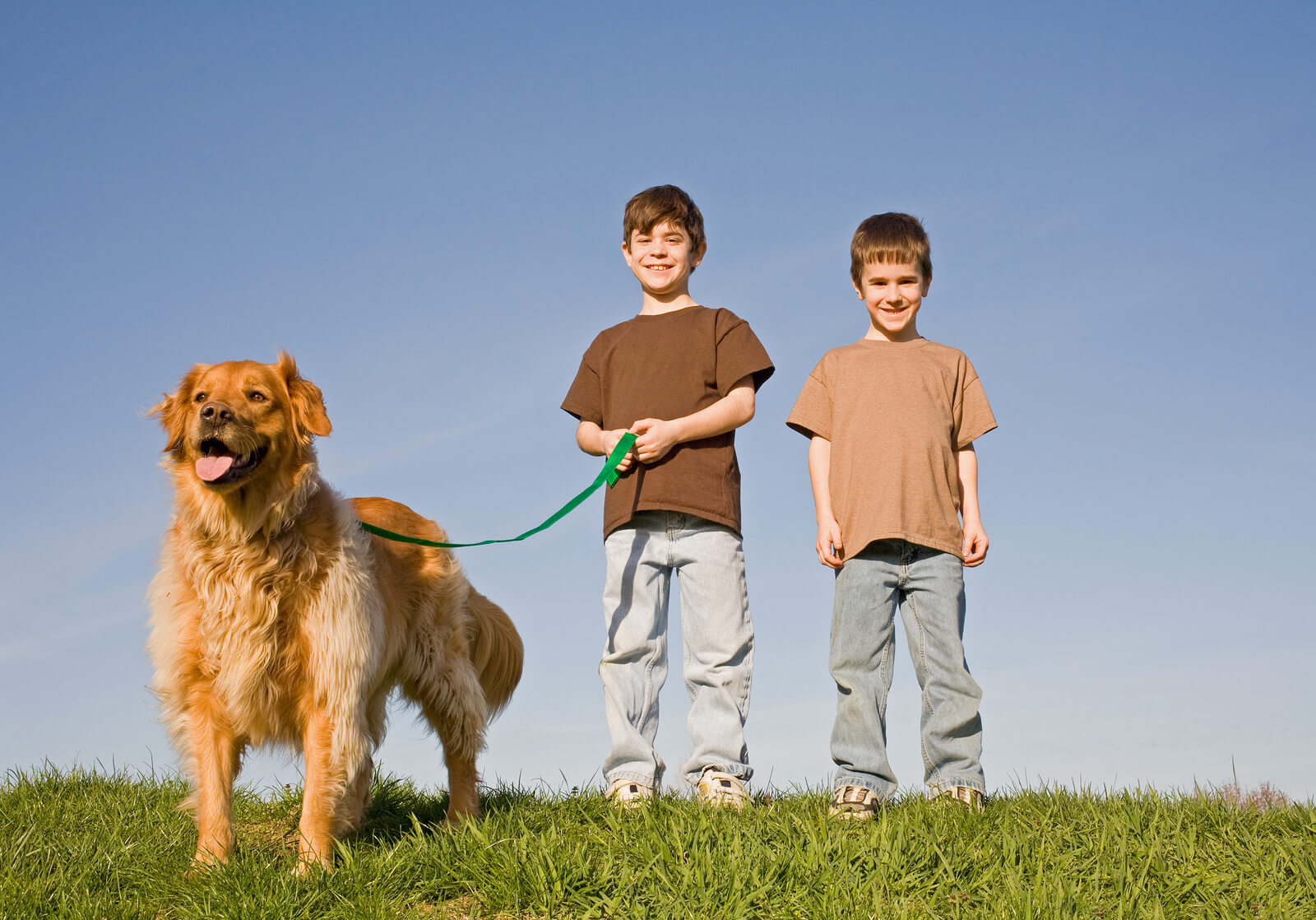 2 boys walking a golden retriever