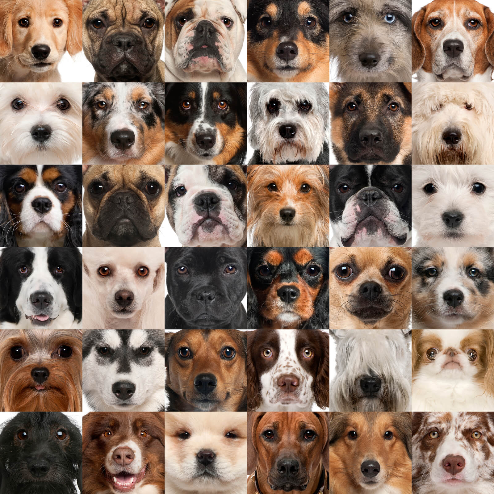 faces of dogs from several breeds