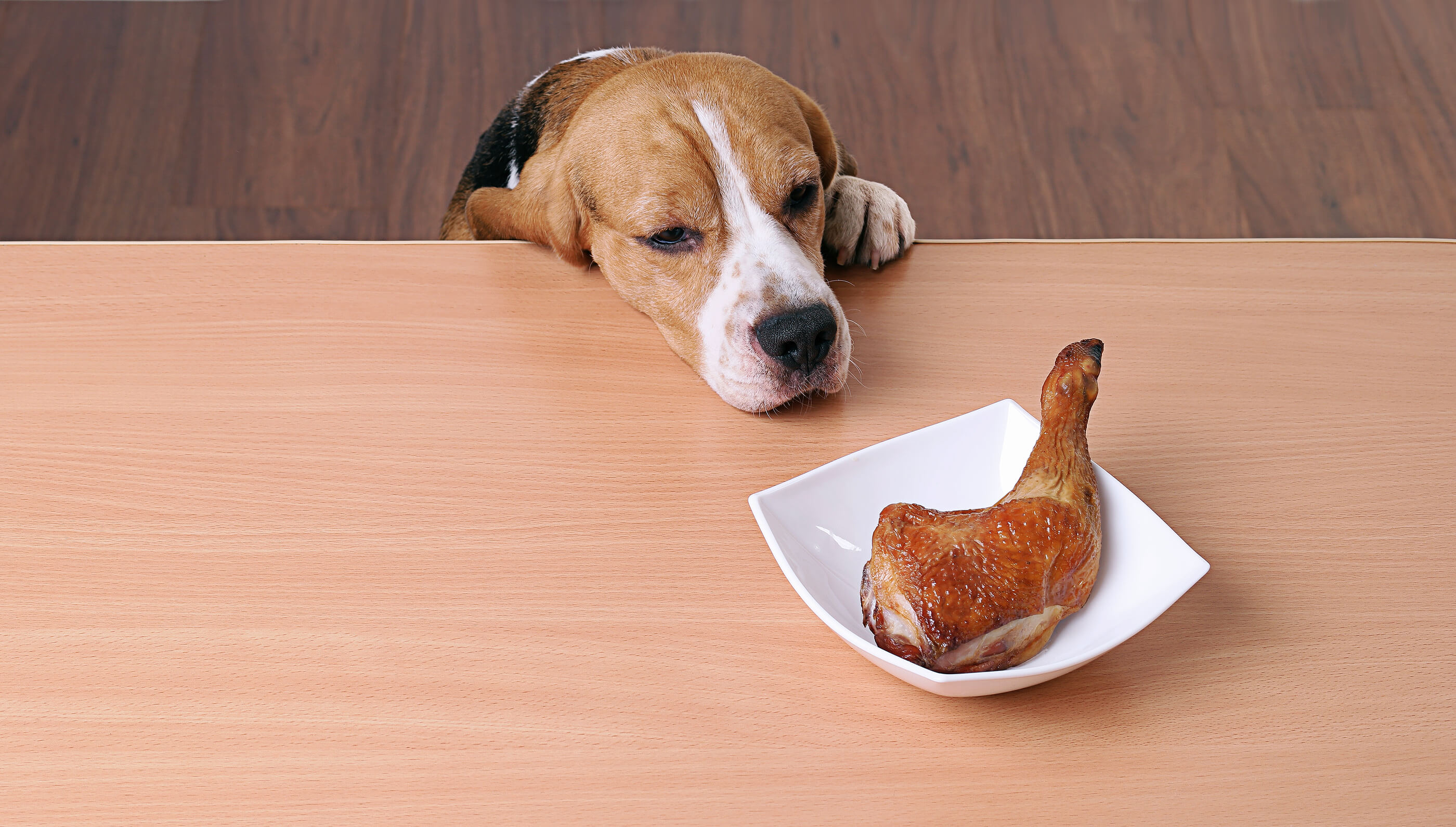 dog in front of a plate with a chicken leg on it
