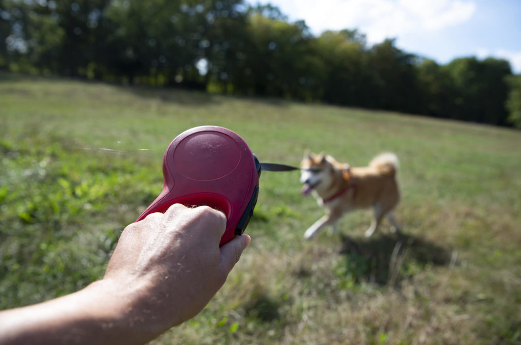 holding a leash with a dog in a field