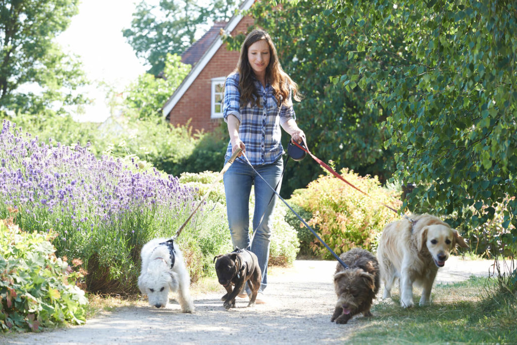 woman walking 4 dogs in a park
