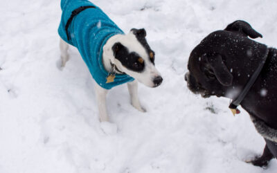 Keeping Your Dog Warm in Cold Weather