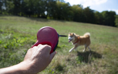 How to Train You Dog to Walk on a Leash